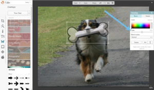 picmonkey tutorial image merge dog3