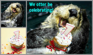 picmonkey tutorial otter be celebrating merge images