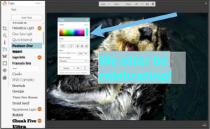 otter be celebrating colors picmonkey tutorial