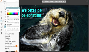 otter be celebrating final text picmonkey tutorial